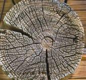 被切开的树干,特写镜头木纹理  免版税图库摄影
