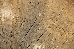 被切的老树干纹理 接近的树干 免版税库存图片