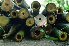 被切除的竹子 免版税库存图片