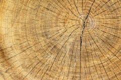 被削减的木头纹理  库存照片