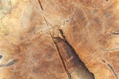 被削减的树干背景木纹理  库存照片