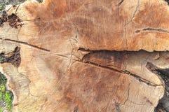 被削减的树干背景木纹理  免版税库存照片