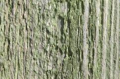 被削减的树板纹理与绿色油漆的 库存图片