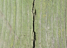 被削减的树板纹理  库存图片