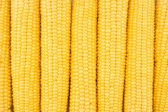 被剥皮的新鲜的玉米穗背景  免版税库存图片