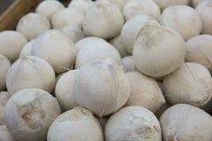 被剥皮的椰子 免版税库存照片
