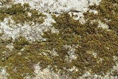 被剥皮的破裂的切削的老膏药墙壁纹理背景 免版税库存图片