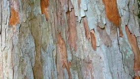 被剥离的树干 免版税库存图片
