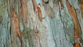 被剥离的树干 库存照片