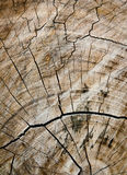 被剪切有结构树 库存图片