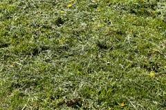 被割的干草 免版税库存图片