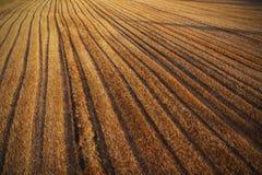 被割的玉米田 免版税图库摄影