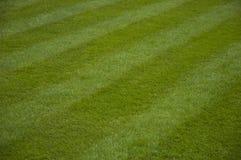 被割的草坪 免版税图库摄影