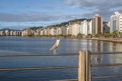 黑被加冠的夜鹭属和城市景色-弗洛里亚诺波利斯,圣卡塔琳娜州,巴西 库存照片