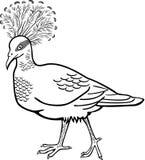 被加冠的鸽子 库存例证