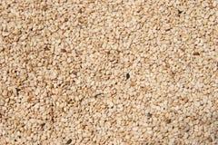 被去壳的原始的种子芝麻 库存照片