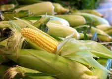 被去外皮的玉米穗在农夫市场上 库存图片