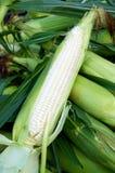 被去外皮的玉米 图库摄影