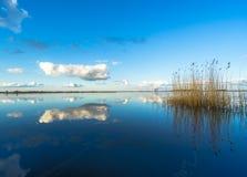 被反射的云彩和芦苇在一个完全地镇静湖 库存照片