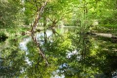 被反射的树和叶子 库存照片