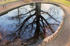 被反射的结构树水 免版税图库摄影