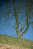 被反映的树在湖 免版税库存图片