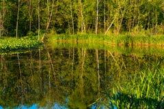 被反映的树 库存照片
