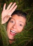 被吮的杉木 免版税库存照片