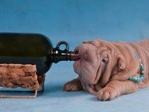 被喝的狗 免版税库存照片