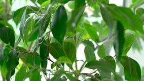 被喷洒的水在绿色植物的叶子落 特写镜头 股票视频