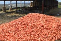 被回收的红萝卜 免版税库存照片