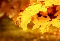 被困住的干燥秋天叶子 免版税图库摄影
