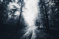 被困扰的森林公路在万圣夜 免版税库存照片