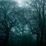 被困扰的森林 免版税库存图片