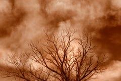 被困扰的结构树 库存照片