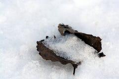 被埋没的雪下 免版税库存图片