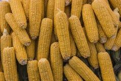 被堆的未加工的玉米棒子 库存图片