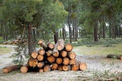 被堆的树。 图库摄影