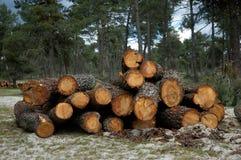 被堆的树。 库存图片