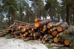 被堆的树。 免版税库存图片