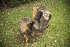 被堆的树桩位子在庭院或公园里 天顶看法 图库摄影