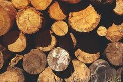 被堆积的木日志,晴天光 免版税库存照片