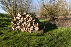 被堆积的木头在荷兰自然区域 免版税库存照片