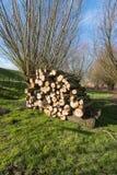 被堆积的木头在荷兰自然区域 免版税库存图片