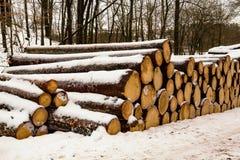 被堆积的树干 免版税图库摄影
