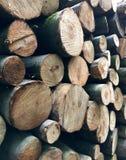 被堆积的树干 免版税库存图片