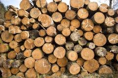 被堆积的树日志 免版税库存图片