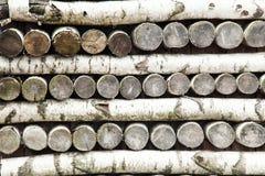 被堆积的桦树日志 库存图片