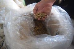 被处理的咖啡产业 图库摄影