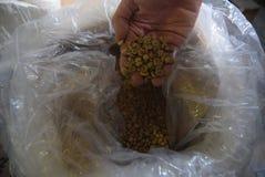 被处理的咖啡产业 免版税库存照片